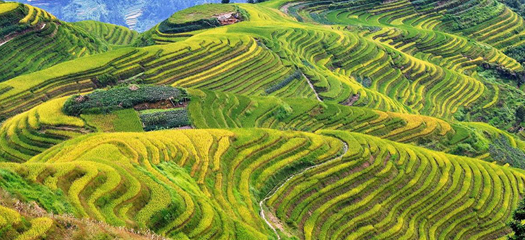 Longji Rice fields