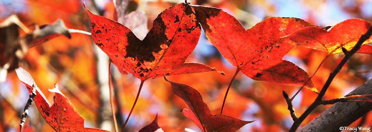 Six Solar Terms in Autumn