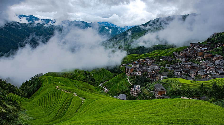 rice terraced fields photography