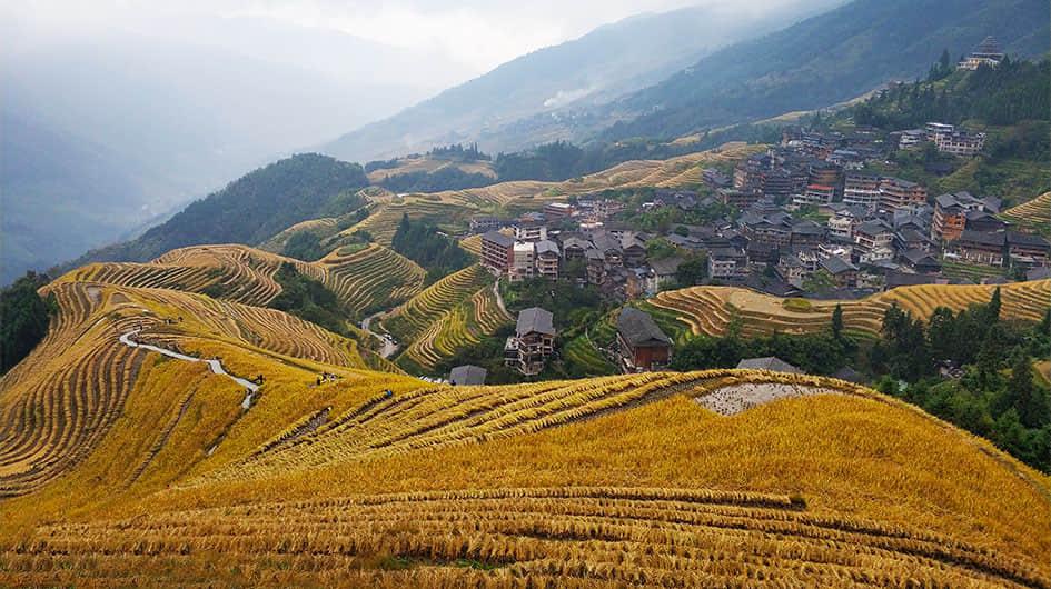 Longji in Autumn