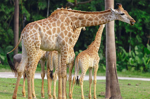 Guangzhou Chimelong Safari Park