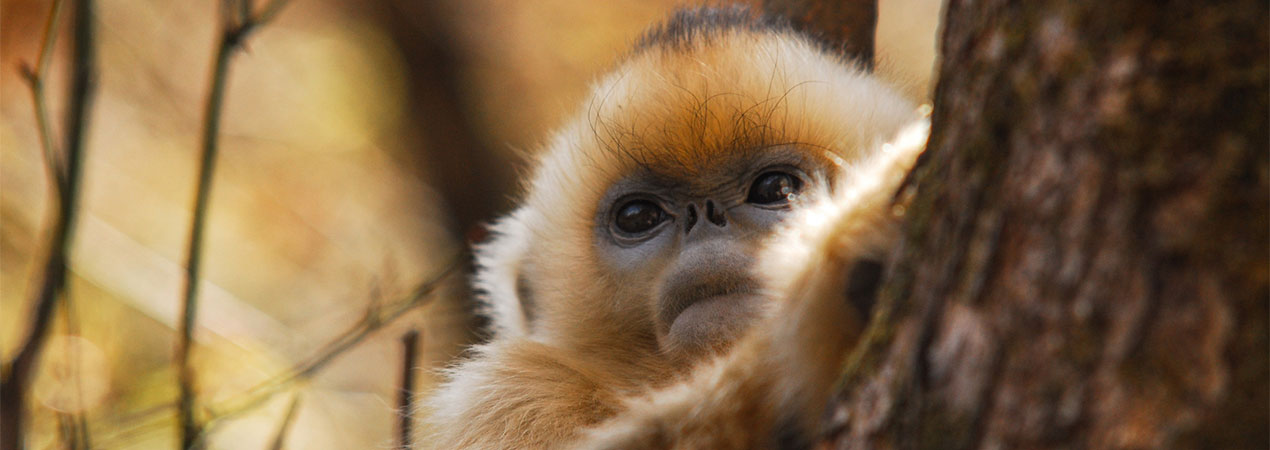 Top 8 Endangered Wildlife Photography in China