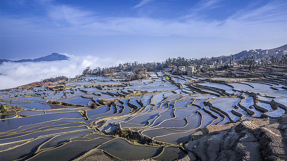 blue terraced fields