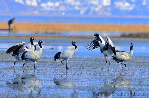 Caohai Lake