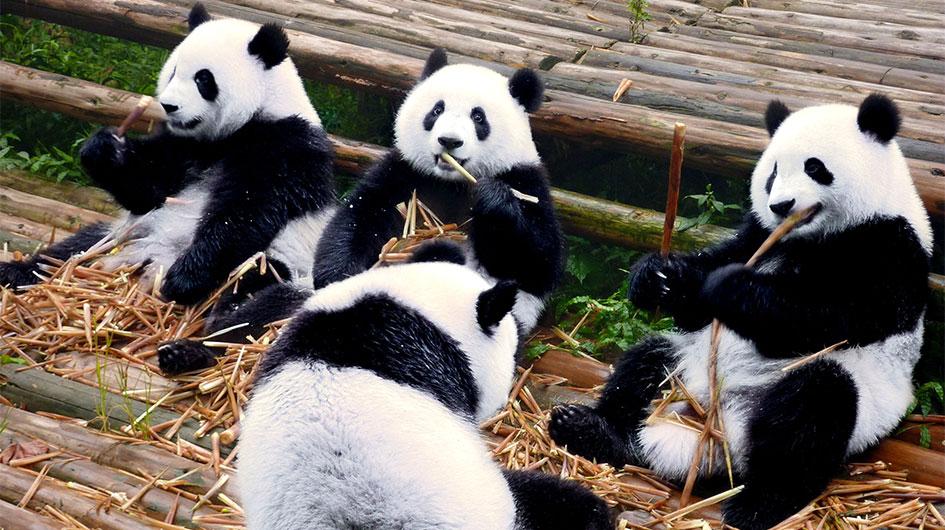 Wolong Panda Reserve Center
