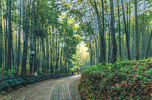 Anji Bamboo Forest